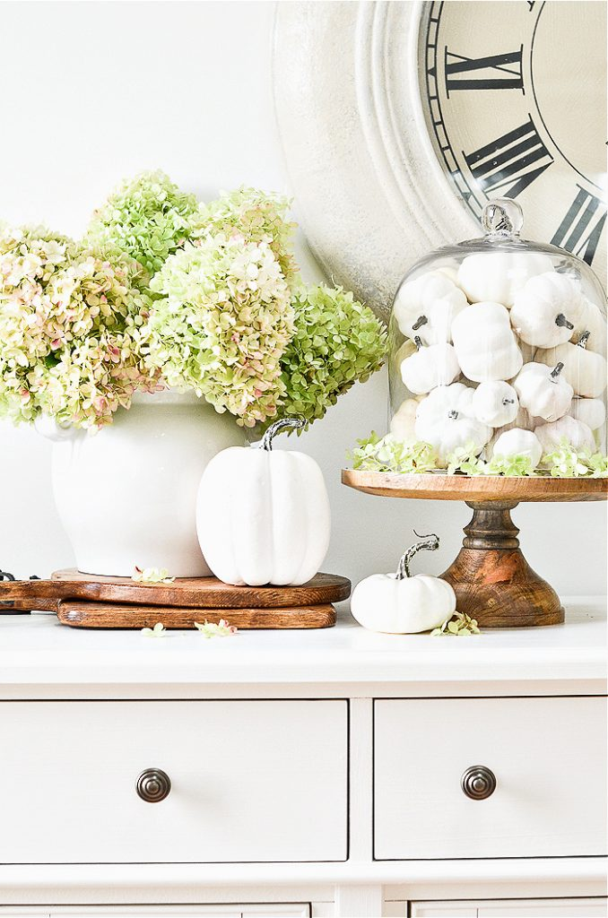 A fall vignette with white pumpkins in a cloche and green hydrangeas