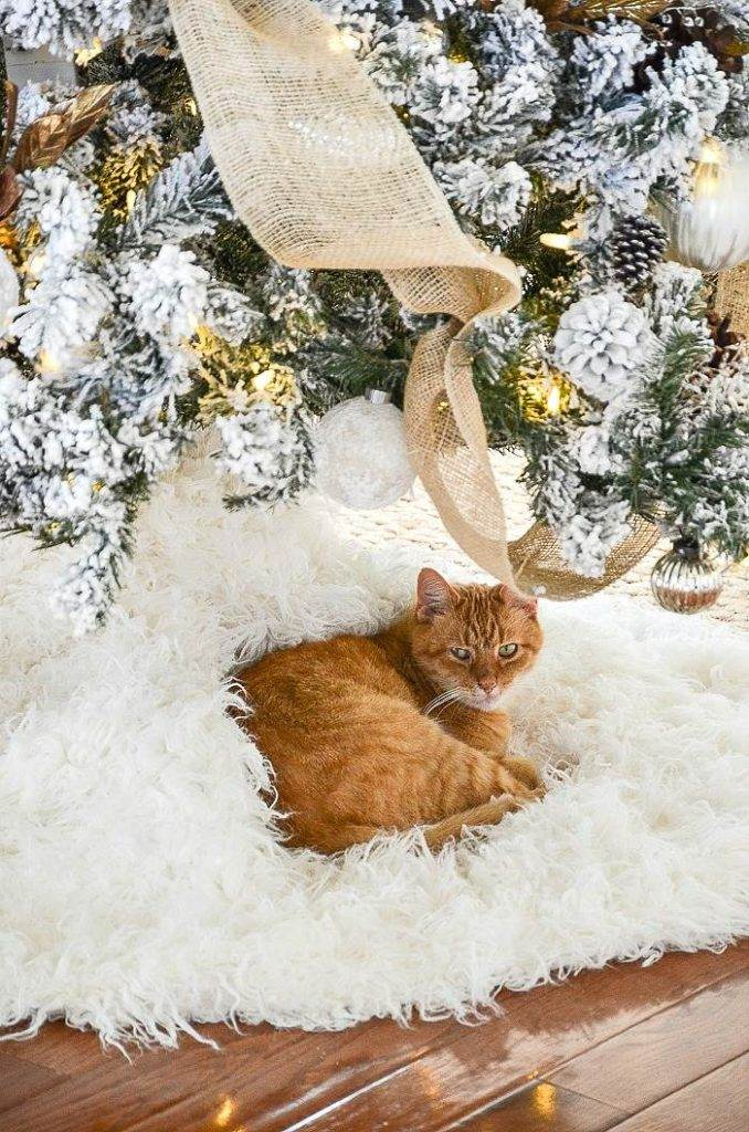 A CAT UNDER THE CHRISTMAS TREE