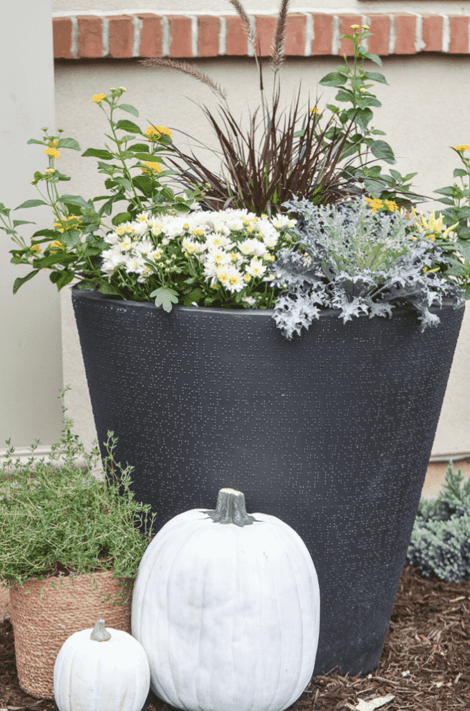 PLANTER FILLED WITH FALL PLANTS AND FLOWERS