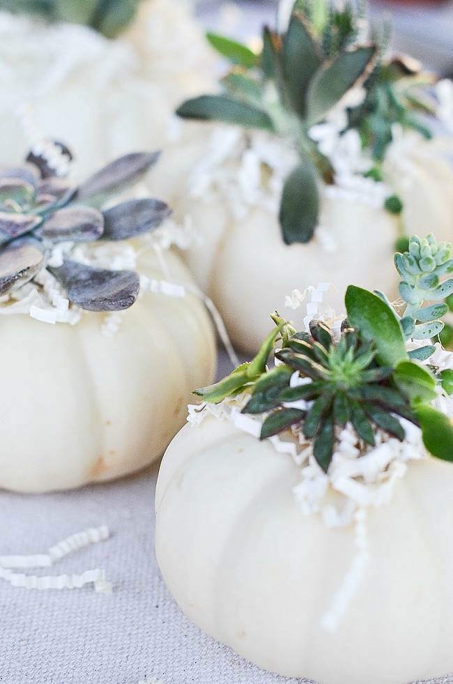 A TRIO OF WHITE SUCCULENT TOPPED PUMPKINS
