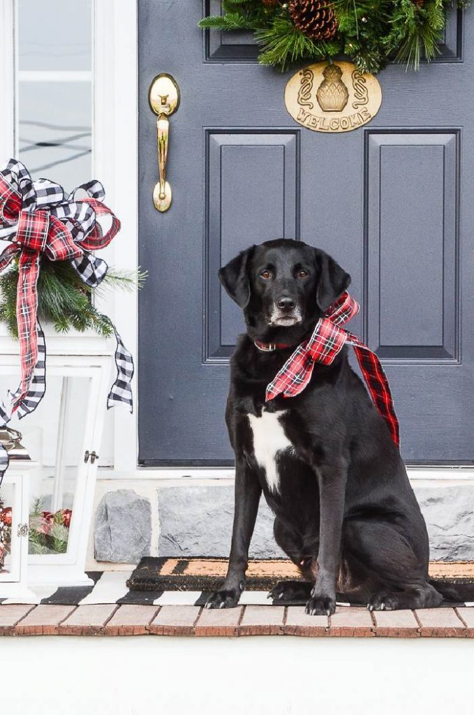 a dog with a Christmas bow around his neck on a porch