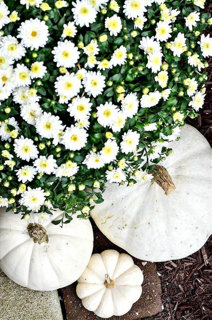 WHITE MUMS AND PUMPKINS ON A FRONT PORCH