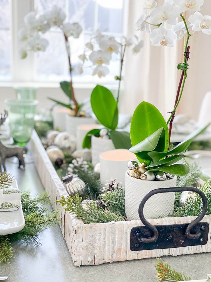 ORCHIDS IN A CHRISTMAS TABLE CENTERPIECE