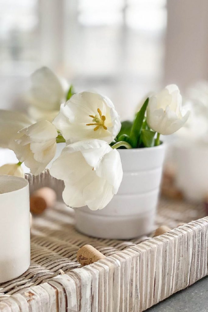CLOSE UP OF WHITE TULIPS