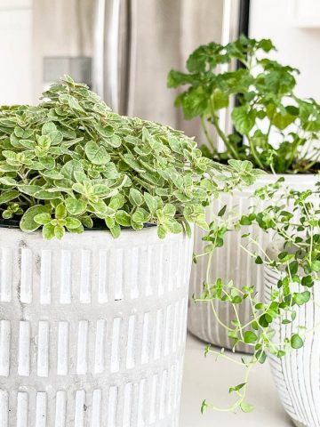GROW HERBS INDOORS, THE ULTIMATE GUIDE