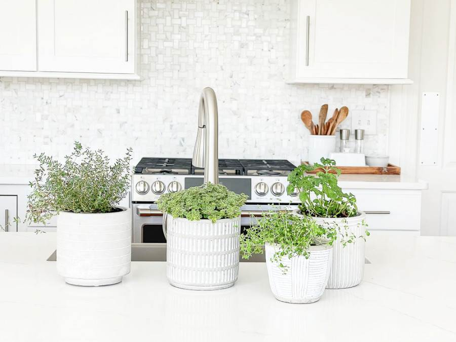 HERB POTS SITTING ON A KITCHEN COUNTER