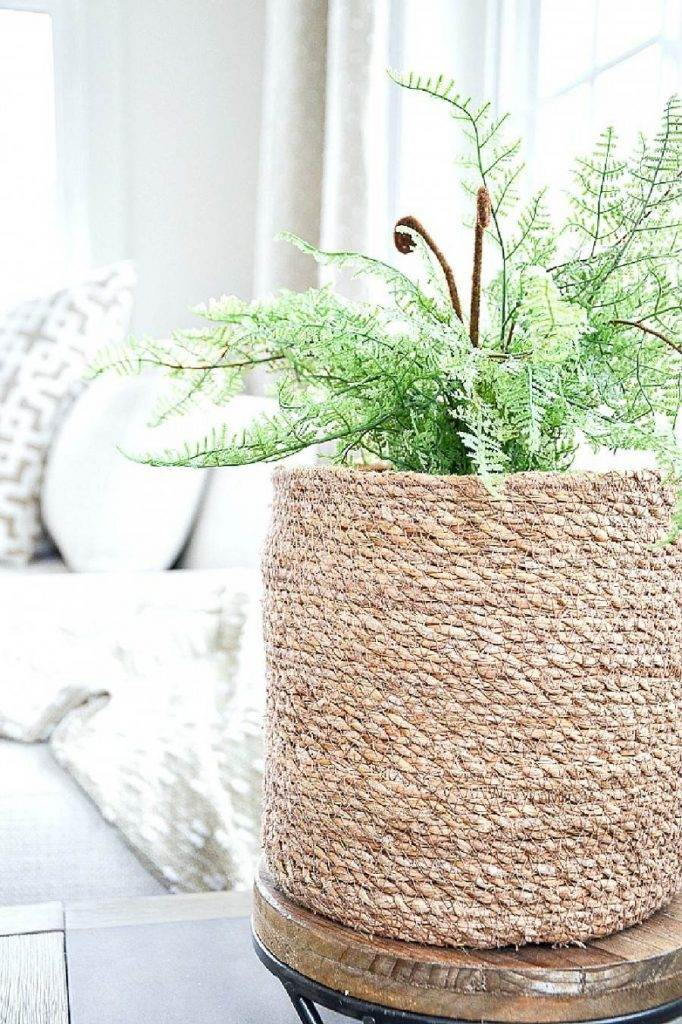 PLANT IN TEXTURAL BASKET IN A SMALL ROOM