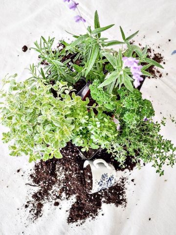 HERB CONTAINER GARDENING GUIDEBOOK