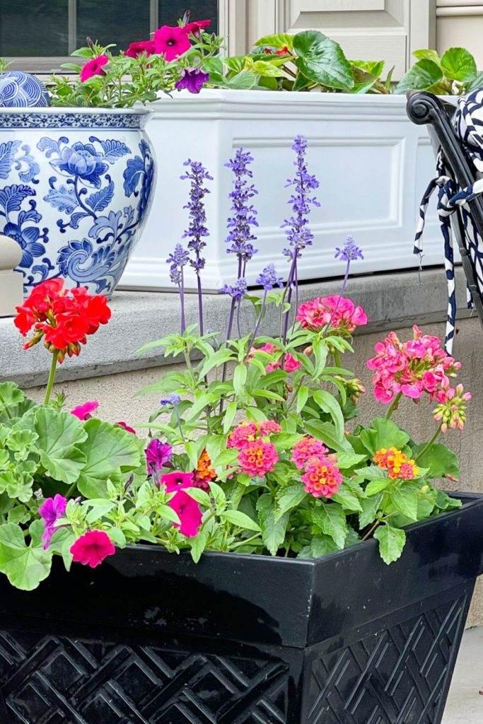 PRETTY SUMMER FLOWERS IN POTS