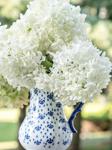 blue and white pitcher with white hydrangeas