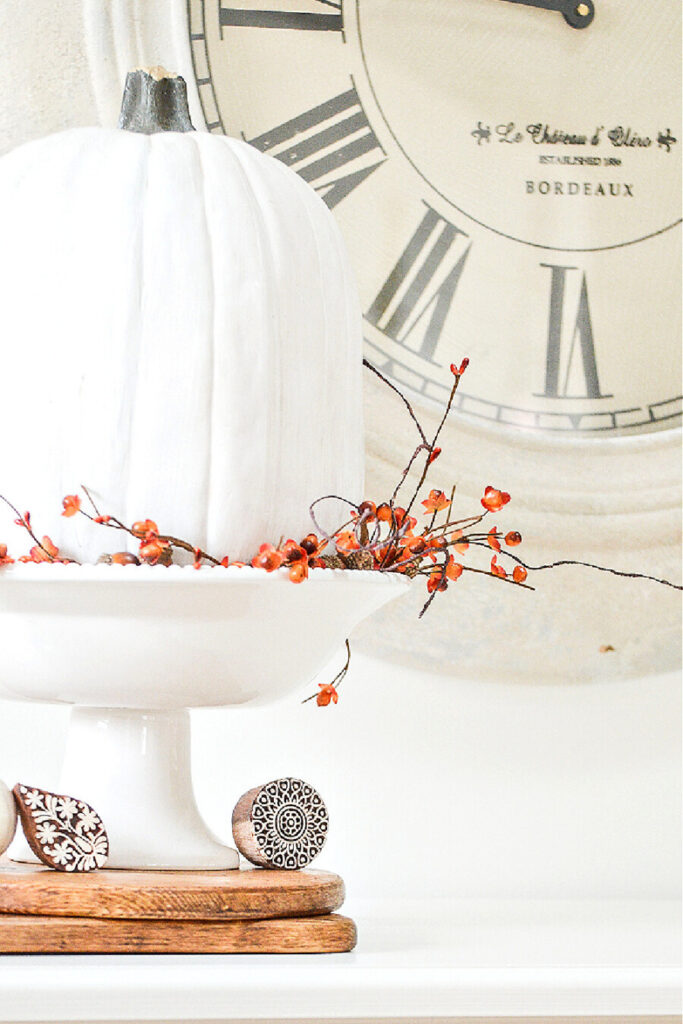 white pumpkin in vignette