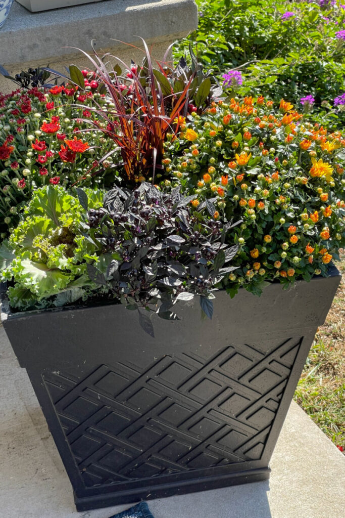 FALL PLANTER FROM INEXPENSIVE PLANTER AT A LANDSCAPE CENTER
