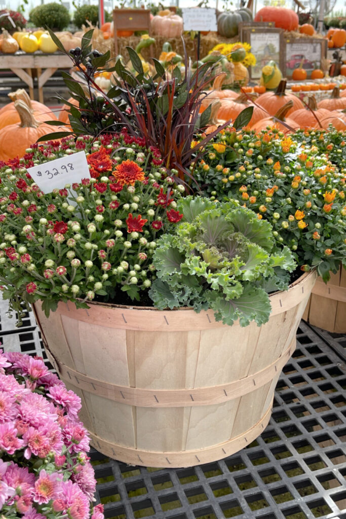 FALL PLANTER FROM A LANDSCAPE CENTER.