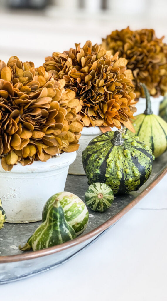 FALL BOXWOOD AND GREEN GOURDS