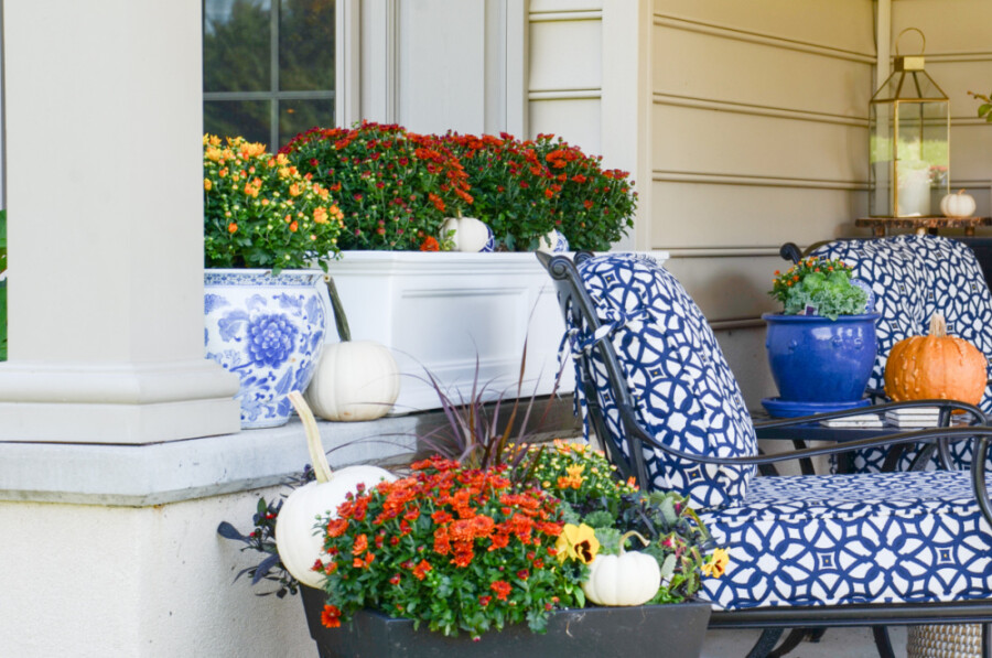 MUMS AND OTHER PLANTERS