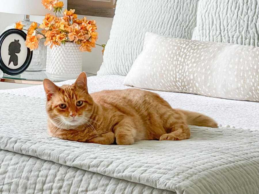 CAT ON A FALL BEDROOM BED